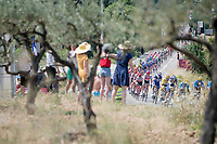 yellow jersey / GC leader Julian Alaphilippe (FRA/Deceuninck - QuickStep) rolling by in the peloton<br /> <br /> Stage 17: Pont du Gard to Gap(206km)<br /> 106th Tour de France 2019 (2.UWT)<br /> <br /> ©kramon