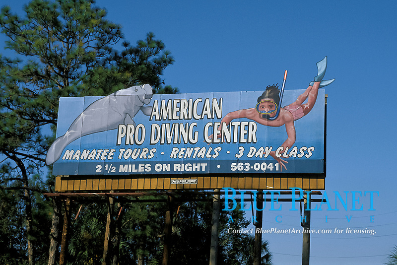 signs and displays featuring manatees are ubiquitous in Crystal River, Florida