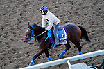 November 4, 2020: Inthemidstofbiz, trained by trainer Cipriano Contreras, exercises in preparation for the Breeders' Cup Filly & Mare Sprint at Keeneland Racetrack in Lexington, Kentucky on November 4, 2020. John Voorhees/Eclipse Sportswire/Breeders Cup