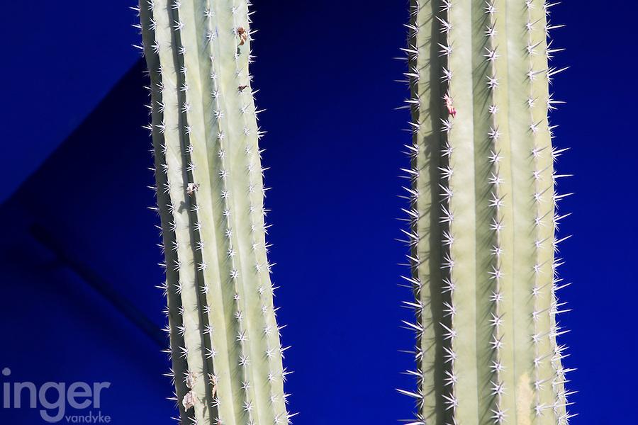 Cactus, the Majorelle Garden, Marrakech, Morocco
