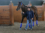 September 19, 2014: Pennsylvania Derby contender Candy Boy schools in the paddock the day before the race at Parx Racing in Bensalem, PA  ©Joan Fairman Kanes/ESW/CSM