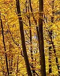 Beech Forest, Soderasen National Park, Sweden
