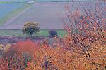 Europa, DEU, Deutschland, Rheinland Pfalz, Hunsrueck, Perscheid, Herbst, Herbstfarben, Baeume, Obstbaeume, Kategorien und Themen, Natur, Umwelt, Landschaft, Landschaftsfotos, Landschaftsfotografie, Landschaftsfoto, Naturschutz, Naturschutzgebiete, Landschaftsschutz, Biotop, Biotope, Landschaftsschutzgebiete, Landschaftsschutzgebiet, Oekologie, Oekologisch, Typisch, Landschaftstypisch, Landschaftspflege....[Fuer die Nutzung gelten die jeweils gueltigen Allgemeinen Liefer-und Geschaeftsbedingungen. Nutzung nur gegen Verwendungsmeldung und Nachweis. Download der AGB unter http://www.image-box.com oder werden auf Anfrage zugesendet. Freigabe ist vorher erforderlich. Jede Nutzung des Fotos ist honorarpflichtig gemaess derzeit gueltiger MFM Liste - Kontakt, Uwe Schmid-Fotografie, Duisburg, Tel. (+49).2065.677997, ..archiv@image-box.com, www.image-box.com]