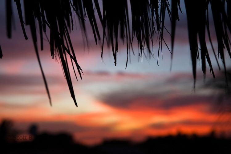 Sunset through palm leaves at Las Penitas, Nicaragua