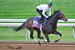 October 26, 2015 :  Harmonize, trained by William I. Mott and owned by Larkin Armstrong, exercises in preparation for the Breeders' Cup Juvenile Fillies Turf at Keeneland Race Track in Lexington, Kentucky on October 26, 2015. Scott Serio/ESW/CSM