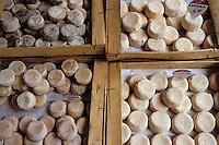 Europe/France/Rhône-Alpes/69/Rhône/Lyon: Le marché du boulevard de la Croix-Rousse- Détail de fromages de chêvre