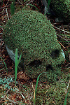 Queen Charlotte Islands, British Columbia, Canada: Haida Gwaii, South Moresby Island, Haida native skull covered in moss at an abandoned village site.