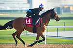 DUBAI,UNITED ARAB EMIRATES-MARCH 29: Sheikhzayedroad,trained by David Simcock,exercises in preparation for the Dubai Gold Cup at Meydan Racecourse on March 29,2018 in Dubai,United Arab Emirates (Photo by Kaz Ishida/Eclipse Sportswire/Getty Images)