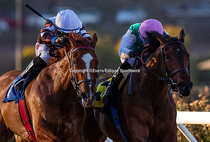 November 29, 2020: Viadera with Joel Rosario up wins the Matriarch Stakes at Del Mar Racecourse in Del Mar, California on November 29, 2020. Evers/Eclipse Sportswire/CSM