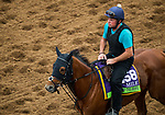 DEL MAR, CA - OCTOBER 30: Home of The Brave, owned by Godolphin Stable Lessee and trained by Hugo Palmer, exercises in preparation for Breeders' Cup Mile at Del Mar Thoroughbred Club on October 30, 2017 in Del Mar, California. (Photo by Jon Durr/Eclipse Sportswire/Breeders Cup)