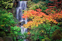 Fall color with waterfall in Japanese Gardens. Portland. Oregon