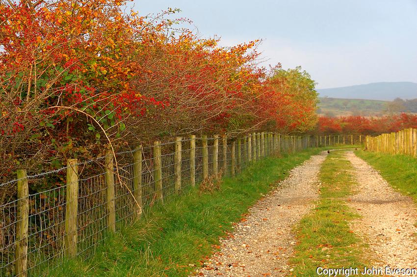 Autumn hedge with wire fence, Lancashire....Copyright John Eveson 01995 61280..j.r.eveson@btinternet.com
