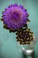 Gastronomie générale / Diététique / Artichaut bio en fleur  // General gastronomy / Diet / Organic artichoke in bloom
