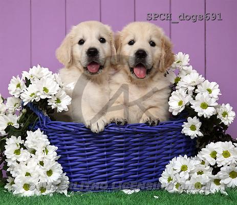 Xavier, ANIMALS, dogs, photos(SPCHdogs691,#A#) Hunde, perros
