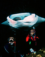 scuba divers and reef manta ray, Manta alfredi, feeding at night, Kona, Big Island, Hawaii, Pacific Ocean