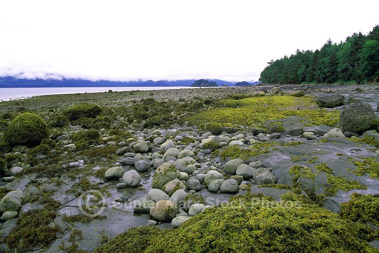Haida Gwaii (Queen Charlotte Islands), Northern BC, British Columbia, Canada - Coastline along Skidegate Inlet at Low Tide, near Queen Charlotte City on Graham Island