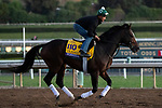 ARCADIA, CA  OCTOBER 25: Breeders' Cup Classic entrant Yoshida, trained by William I. Mott, exercises in preparation for the Breeders' Cup World Championships at Santa Anita Park in Arcadia, California on October 25, 2019. (Photo by Casey Phillips/Eclipse Sportswire/CSM)