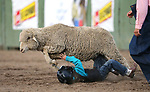Breighdon Swenson, 7, competes in the Mutton Busting event at the 5th Annual Carson City Bulls, Broncs & Barrels event at Fuji Park, in Carson City, Nev., on Saturday, July 29, 2017. <br />