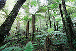 Whirinaki Forest, North Island, New Zealand