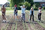 Foto: VidiPhoto<br /> <br /> RANDWIJK – Studenten van de Wageningen Universiteit & Research moeten dinsdag nogal wieden met de hand. Het beschermende op zonne-energie voortgedreven wiedbed van Ekoboerderij De Lingehof in Randwijk (Gld), waarop de studenten normaal gesproken liggend hun werk doen, heeft panne en moet gerepareerd worden. Voor het 'vakantiepersoneel' is het werk met de schoffel in de brandende zon en tussen 12 ha. uien even wennen. Gelukkig is er een flinke voorraad drinkwater voorhanden. Het biologisch-dynamische akkerbouwbedrijf gebruikt geen bestrijdingsmiddelen en wiedt al het onkruid met de hand. Omdat het op dit moment groeizaam weer is, moeten de studenten dit jaar wat harder werken.