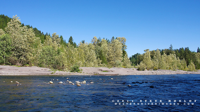 The late spring sky glows blue and reflects on the river. Cottonwood and alder trees blow in the breeze on a large sand island.