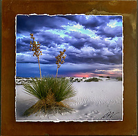 Lone Yucca - Mixed Media - New Mexico<br />