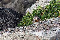 A stare-down with a California ground squirrel along the shores of San Francisco Bay.