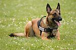 Police K-9 dog for Brown Deer Wisconsin