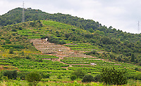 Terraced vineyard. Potmje village, Dingac wine region, Peljesac peninsula. Dingac village and region. Peljesac peninsula. Dalmatian Coast, Croatia, Europe.