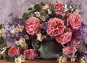 Interlitho-Helga, FLOWERS, BLUMEN, FLORES, photos+++++,pink roses,KL16516,#f#, EVERYDAY ,roses