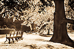Park bench and tree bathed in sunlight. Sepia tone.