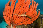Southern Australia Underwater