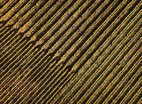 aerial photograph of a Sonoma County, California vineyard in fall