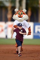 Lakeland Flying Tigers mascot South Paw in a race the bases on field promotion against a young fan during a game against the Palm Beach Cardinals on April 13, 2015 at Joker Marchant Stadium in Lakeland, Florida.  Palm Beach defeated Lakeland 4-0.  (Mike Janes/Four Seam Images)