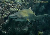0128-08tt  Sand Tiger Shark, Carcharias taurus © David Kuhn/Dwight Kuhn Photography