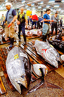 bluefin tuna, Thunnus thynnus, to be auctioned, Tsukiji Market, Tokyo, Japan, Pacific Ocean