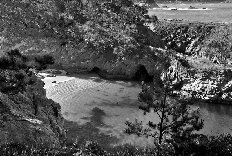 China beach with California Harbor Seals on beach. Point Lobos State Reserve, California