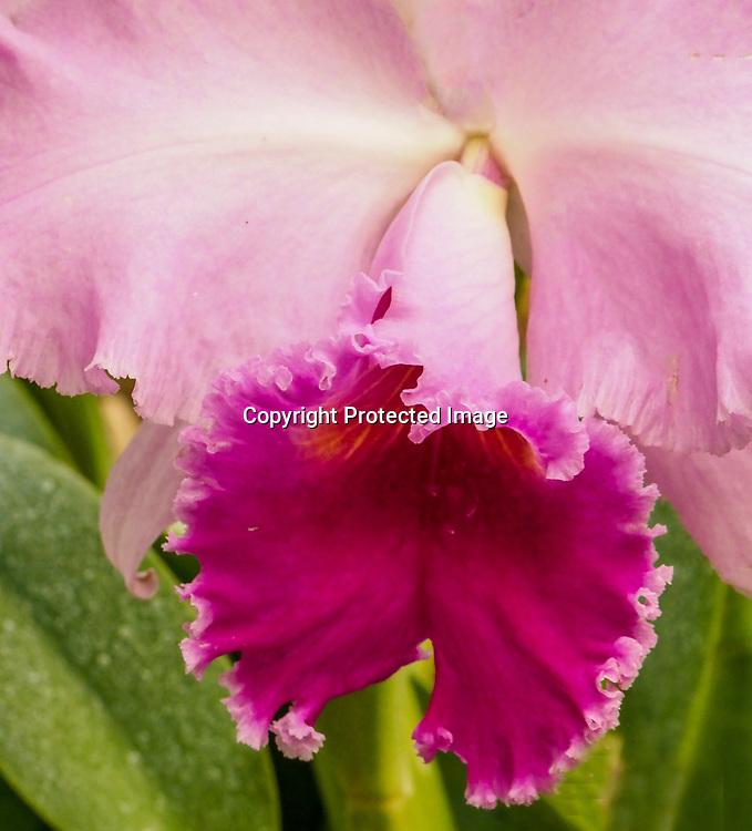 Ochids are beautiful flowers.