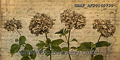 Assaf, FLOWERS, BLUMEN, FLORES, paintings,+Color, Colour Image, Dried, Floral, Flower, Flower Head, Flowers, Four Flowers, Handwriting, Hydrangea, Hydrangeas, In A Row,+Leaves, Message, Old Fashioned, Photography, Post Card, Retro, Text, Vintage,Color, Colour Image, Dried, Floral, Flower, Flo+wer Head, Flowers, Four Flowers, Handwriting, Hydrangea, Hydrangeas, In A Row, Leaves, Message, Old Fashioned, Photography, P+ost Card, Retro, Text, Vintage+,GBAFAF20140730,#f#, EVERYDAY