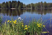 flowers at Lake Baiersoiener See, Upper Bavaria, Germany