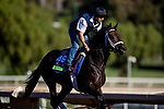 OCT 28: Breeders' Cup Mile entrant Lucullan, trained by Kiaran P. McLaughlin, at Santa Anita Park in Arcadia, California on Oct 28, 2019. Evers/Eclipse Sportswire/Breeders' Cup