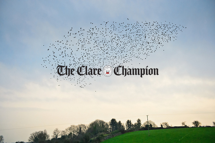 A murmuration of starlings in the sky near Gurteen, Doora. Photograph by John Kelly.