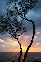 Tree and sunset. The Hapuna coast. Hawaii Island