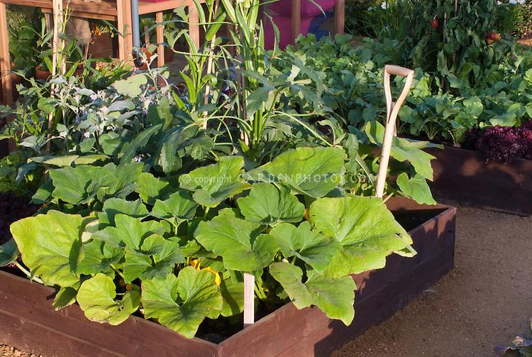 Vegetable Garden in raised beds, squash, okra, etc