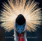 Carl, ANIMALS, wildlife, photos(SWLA3753,#A#)