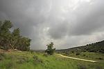 Israel, Shephelah, Amatzia Forest