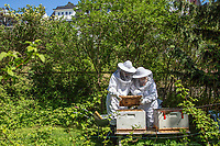 Beekepers tend to man made hive in a garden in Oslo. Bees are essential for nature, as well as providing an opportunity to collect their honey.