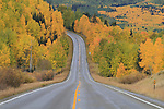 Aspen trees along highway in the San Juan Mountains near Telluride, Colorado, USA. John offers autumn photo tours throughout Colorado.