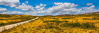 California spring wildflower superbloom panorama, Carrizo Plains National Monument Grasslands, California