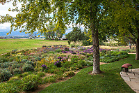 Backyard lawn transition to prairie garden to field; Scripter garden, Colorado; design Lauren Springer Ogden